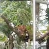 Een dagje hortus botanicus met Babsie